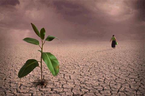 semina  deserto